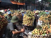 Bac Giang boosts links in selling processed vegetables